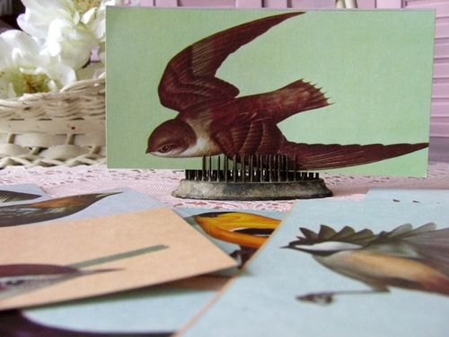 Bird flashcard