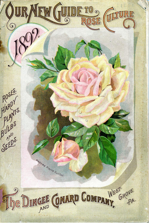 Little Pink Studio: Roses