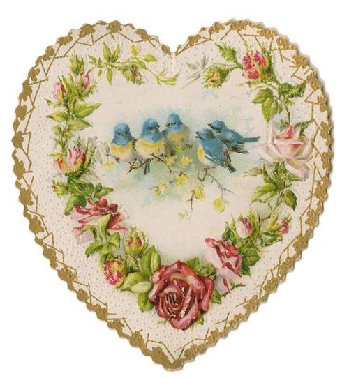 Bird heart 2
