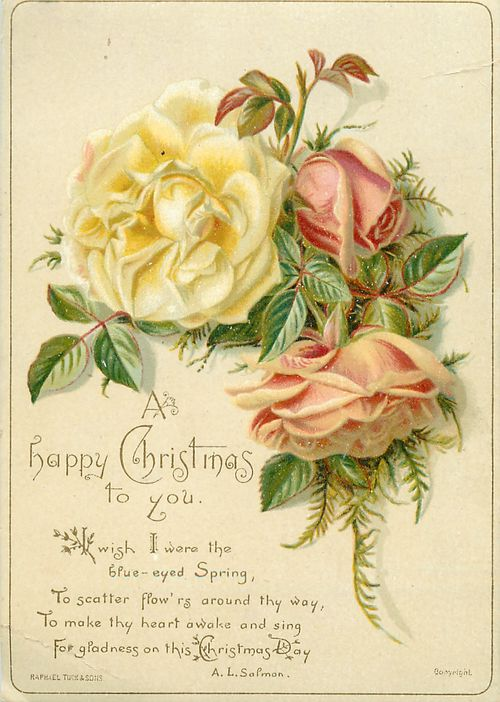 Christmas and roses